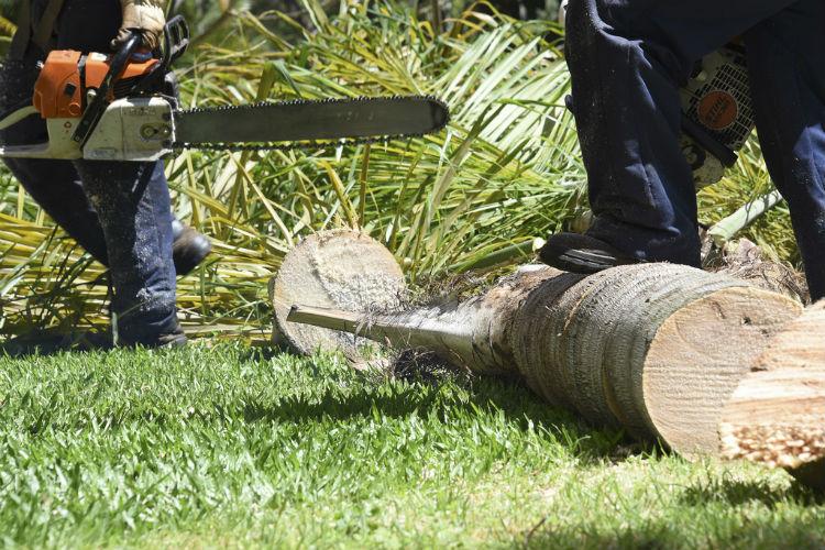 Vinte árvores em risco vão ser abatidas no Parque Aquilino Ribeiro em Viseu